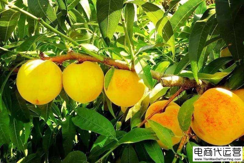 直通车托管案例:水果行业的中小卖家爆款打造