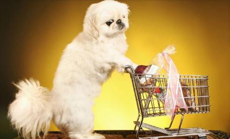 直通车托管案例:宠物用品店铺分析,利用直通